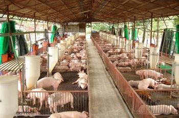"""Liệu có """"đổi mới toàn diện"""" được ngành chăn nuôi?"""
