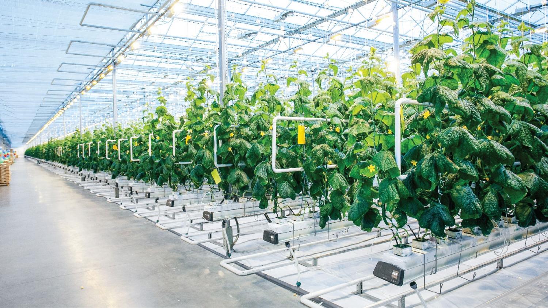 Thủ tướng: Chuyển nông nghiệp sản lượng cao sang nông nghiệp công nghệ cao, sinh thái