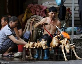 [Chùm ảnh] Trung Quốc: Giết 10.000 con chó để phục vụ... lễ hội