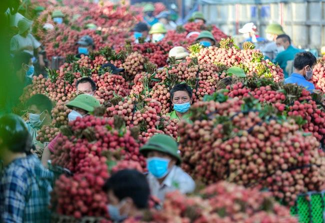 Ưu tiên lưu thông nhanh chóng xe chở vải thiều từ Bắc Giang