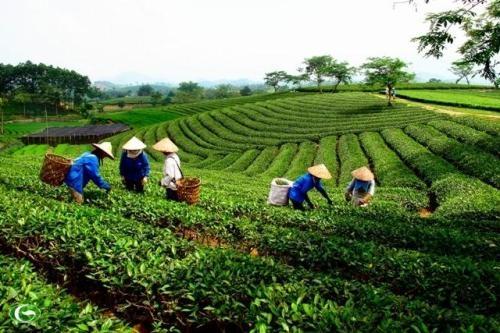 Tiếp tục sắp xếp, đổi mới và phát triển, nâng cao hiệu quả hoạt động của công ty nông, lâm nghiệp