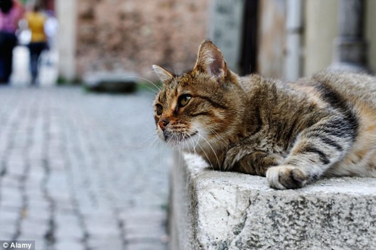 Kỳ lạ thị trấn trao cho động vật quyền… con người