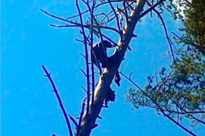 Phát hiện thi thể chết ngồi trên cành cây suốt 8 tháng
