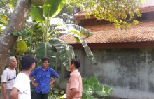 Gỗ sưa ở đình làng bị đánh cắp: 'Của Bụt mất một đền mười'