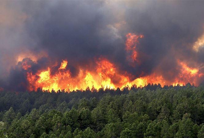 Công điện của Thủ tướng Chính phủ về tăng cường các biện pháp cấp bách phòng cháy, chữa cháy rừng