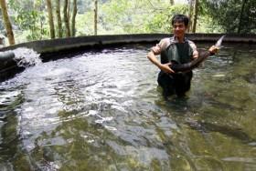 Xử lý cá tầm nhập lậu ở Lạng Sơn: Lúng túng như cá mắc cạn