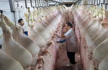 Nhọc nhằn xuất khẩu thịt lợn