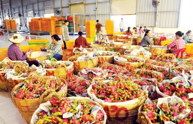 Xuất khẩu rau quả: Khó khăn bủa vây