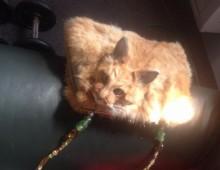 """Kinh dị túi xách làm từ """"mèo nguyên con"""""""
