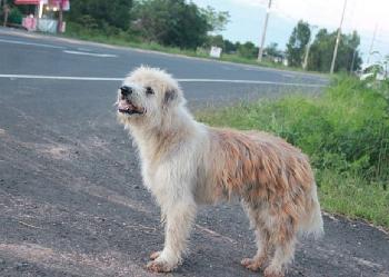 Chú chó bị lạc đứng đợi chủ quay lại suốt 4 năm