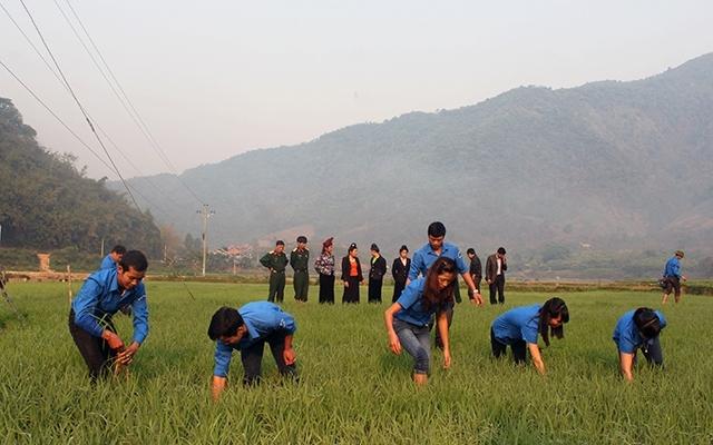 Tăng cường trí thức trẻ tình nguyện đến các khu kinh tế - quốc phòng