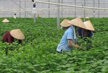 chinh phuc thi truong nhat ban bai hoc tu xuat khau la tia to xanh