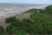 Phê duyệt Đề án Bảo vệ và phát triển rừng vùng ven biển giai đoạn 2021-2030