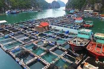 Ngành thủy sản có thể đối mặt với tăng trường âm