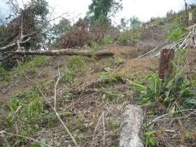 Muốn sống mang cây trả lại rừng!