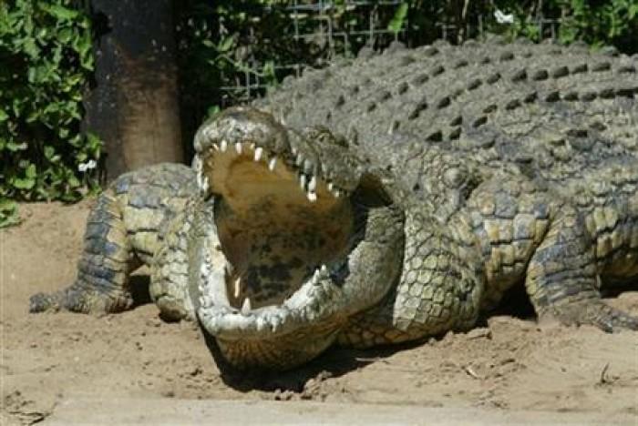 """Indonesia: """"Chiêu mộ"""" cá sấu để canh giữ tử tù ma túy"""