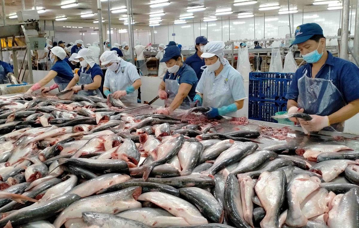 Xuất khẩu thủy sản: Động lực lớn từ EVFTA