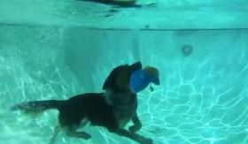Gặp chú chó có khả năng kỳ diệu!