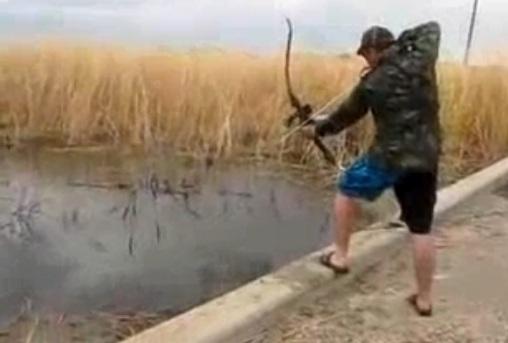 Bắt cá bằng cung tên?!