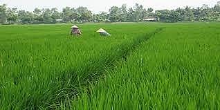 Chuyển mục đích sử dụng đất tại tỉnh Nam Định