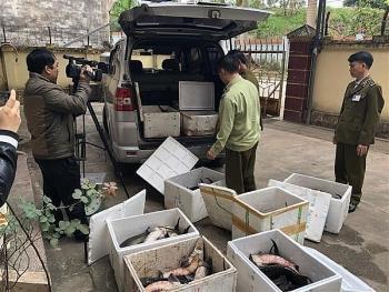 Ban chỉ đạo 389 quốc gia: Tăng cường kiểm tra hoạt động nhập khẩu và kinh doanh cá tầm