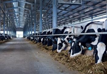 Giảm 50% mức thu phí trong chăn nuôi từ ngày 17/5 đến hết năm 2021