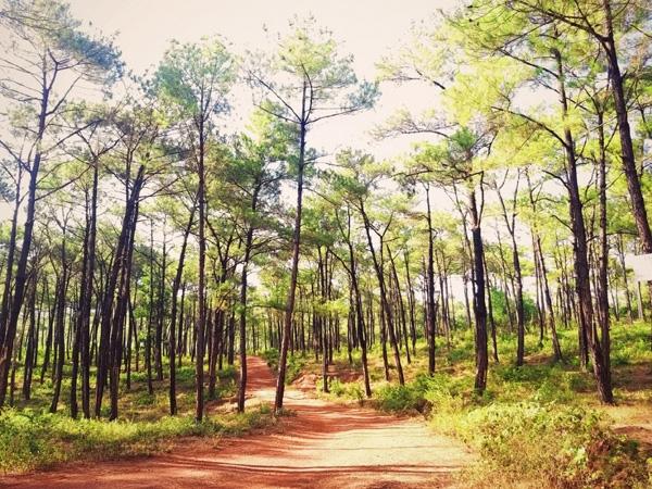 Quảng Bình tiếp tục đứng thứ hai cả nước về tỷ lệ che phủ rừng