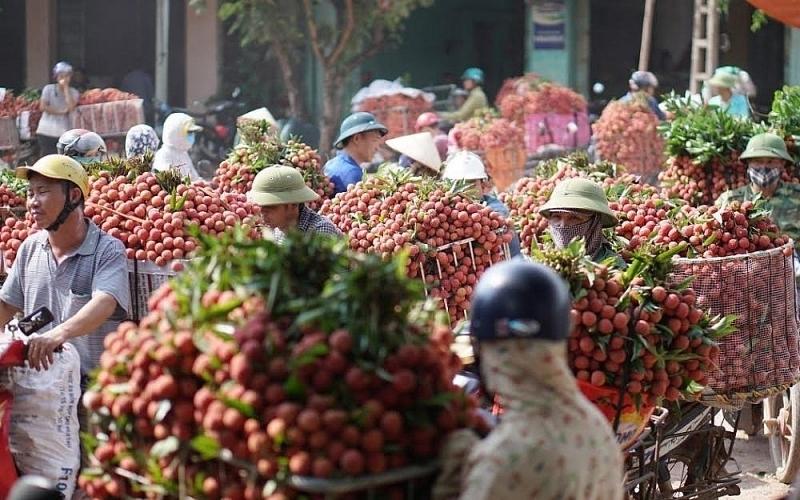 Chính phủ đồng ý cho thương nhân nước ngoài nhập cảnh thu mua vải thiều Bắc Giang