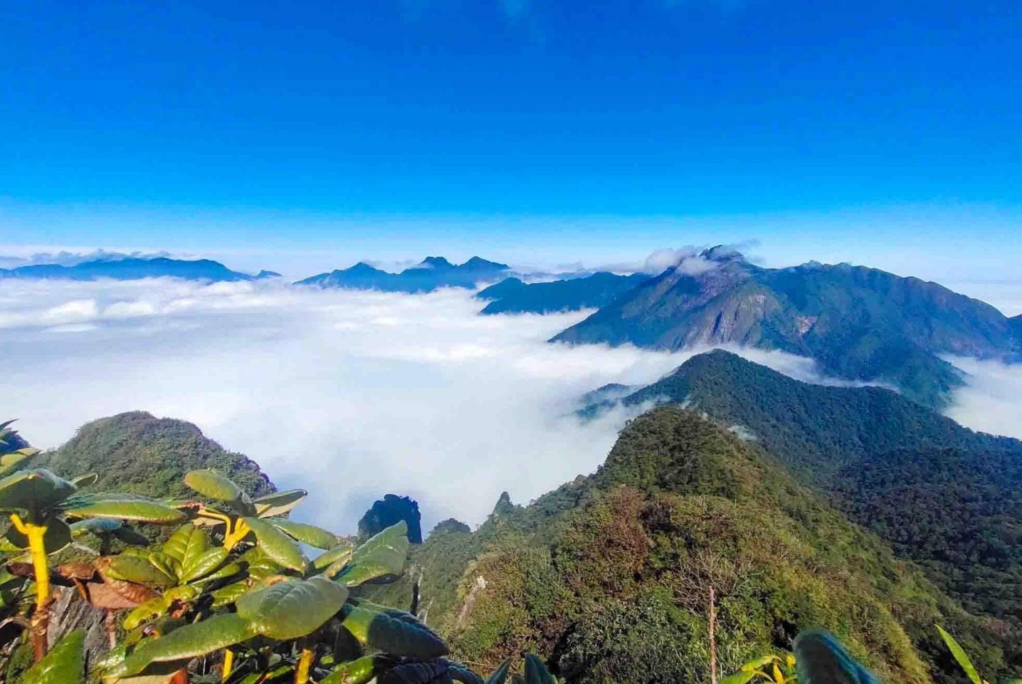 Trekking Tả Liên Sơn - Khám phá khu rừng cổ tích