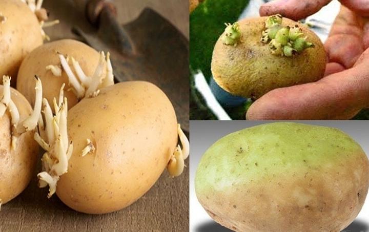 Cảnh giác với những chất độc tự nhiên có trong thực phẩm