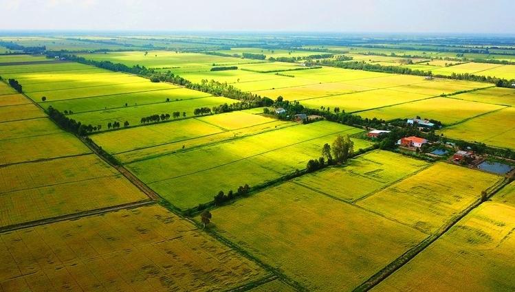 Long An và Đồng Tháp được phép thực hiện chuyển mục đích sử dụng đất trồng lúa