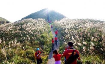 Mùa cỏ lau ở Bình Liêu