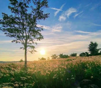 Gia Lai: Đồi cỏ hồng Chư Sê đẹp mơ màng nằm giữa núi rừng hút hồn du khách