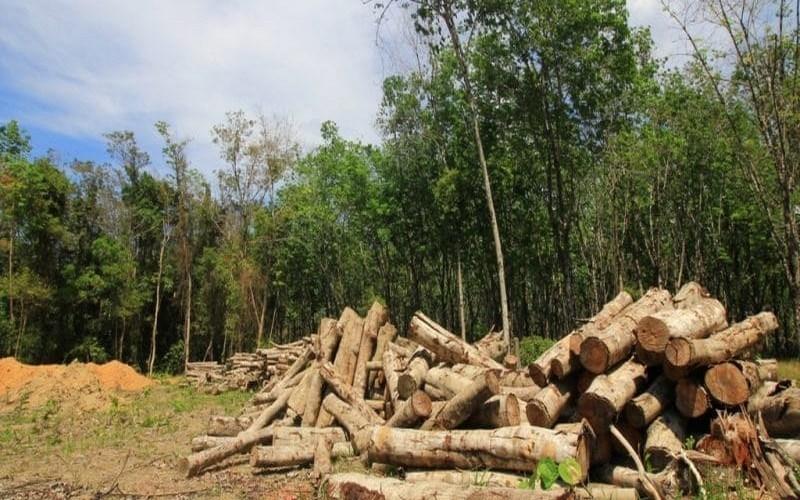 Khí tự nhiên: Giải pháp cho cuộc chiến chống phá rừng ở Congo