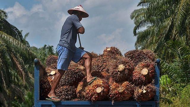 WTO giải quyết tranh chấp giữa Malaysia và EU về dầu cọ