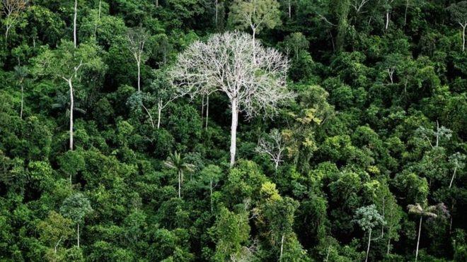 Brazil mở cửa rừng Amazon cho khai thác khoáng sản