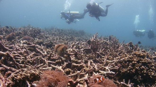Bùng nổ kinh tế Trung Quốc phá hủy các rạn san hô ở Biển Đông