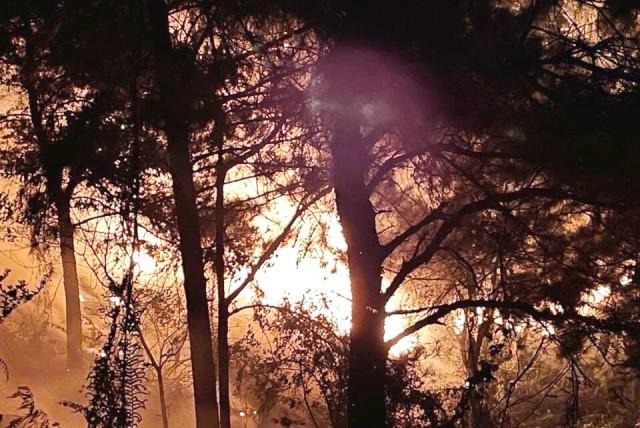 Hà Nội: Vì sao vụ cháy rừng phòng hộ tại Sóc Sơn cần đến 12 giờ để dập tắt?