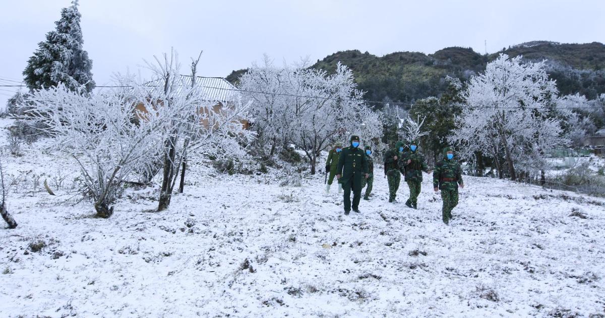 Tuyết rơi dày 20cm, 45 con trâu chết vì giá lạnh