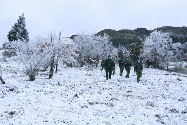 Tuyết rơi dày 20cm, 45 con trâu chết vì giá lạnh - 1