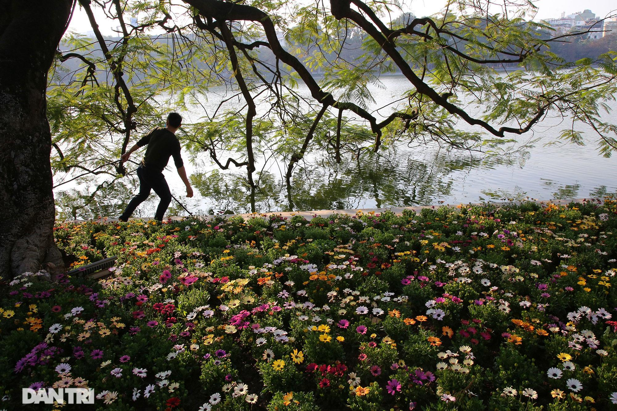 Hồ Gươm trang trí hoa rực rỡ sắc màu chào mừng Đại hội XIII của Đảng - 3