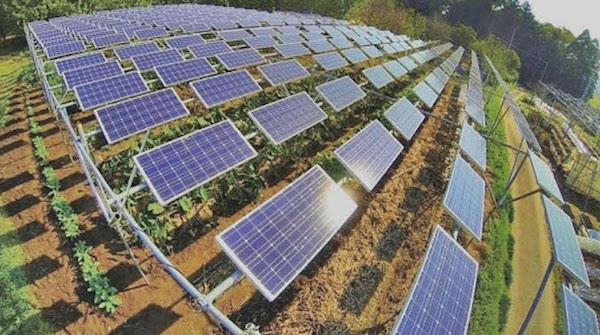 ác dự án điện mặt trời áp mái nhà trong năm 2020, đặc biệt là trong tuần cuối cùng của năm, đã khiến tình trạng không huy động các nhà máy điện mặt trời lớn càng trở nên trầm trọng.