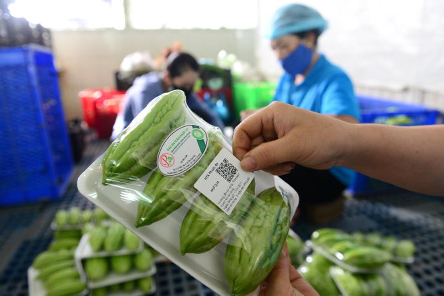 Nhiều địa phương vẫn chưa cập nhật thông tin để làm truy xuất nguồn gốc về vùng trồng, cơ sở đóng gói…p/Ảnh: Dán tem truy xuất nguồn gốc tại HTX Phước An, TP HCM.