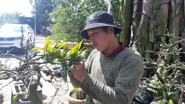 Cận cảnh vườn mai cổ thụ tiền tỷ sắp ra mắt xuân Tân Sửu - 8