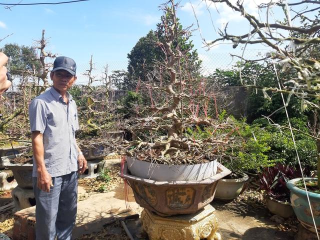 Cận cảnh vườn mai cổ thụ tiền tỷ sắp ra mắt xuân Tân Sửu - 4