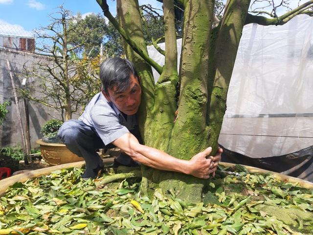 Cận cảnh vườn mai cổ thụ tiền tỷ sắp ra mắt xuân Tân Sửu - 2