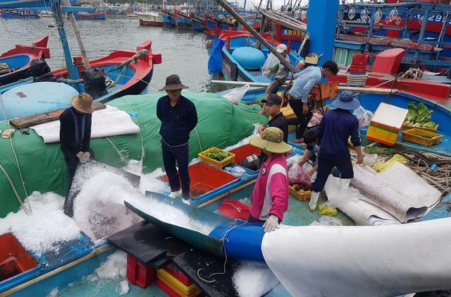 Khánh Hòa: Ngư dân bỏ Tết vươn Trường Sa, bám vụ cá ngừ đại dương - 5