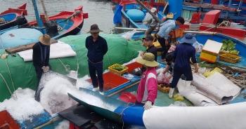 """Khánh Hòa: Ngư dân bỏ Tết vươn Trường Sa, """"bám"""" vụ cá ngừ đại dương"""