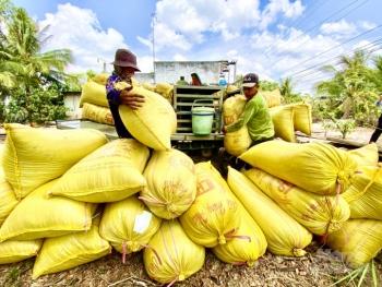 Giá cả lương thực trong và sau Tết chỉ tăng giảm dưới 10%