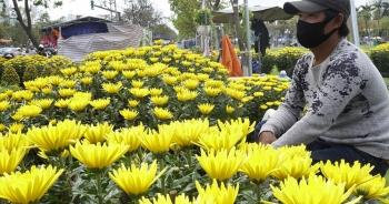"""""""Ế"""" hoa Tết, dân buôn thà đập chậu bỏ chứ không bán tháo"""